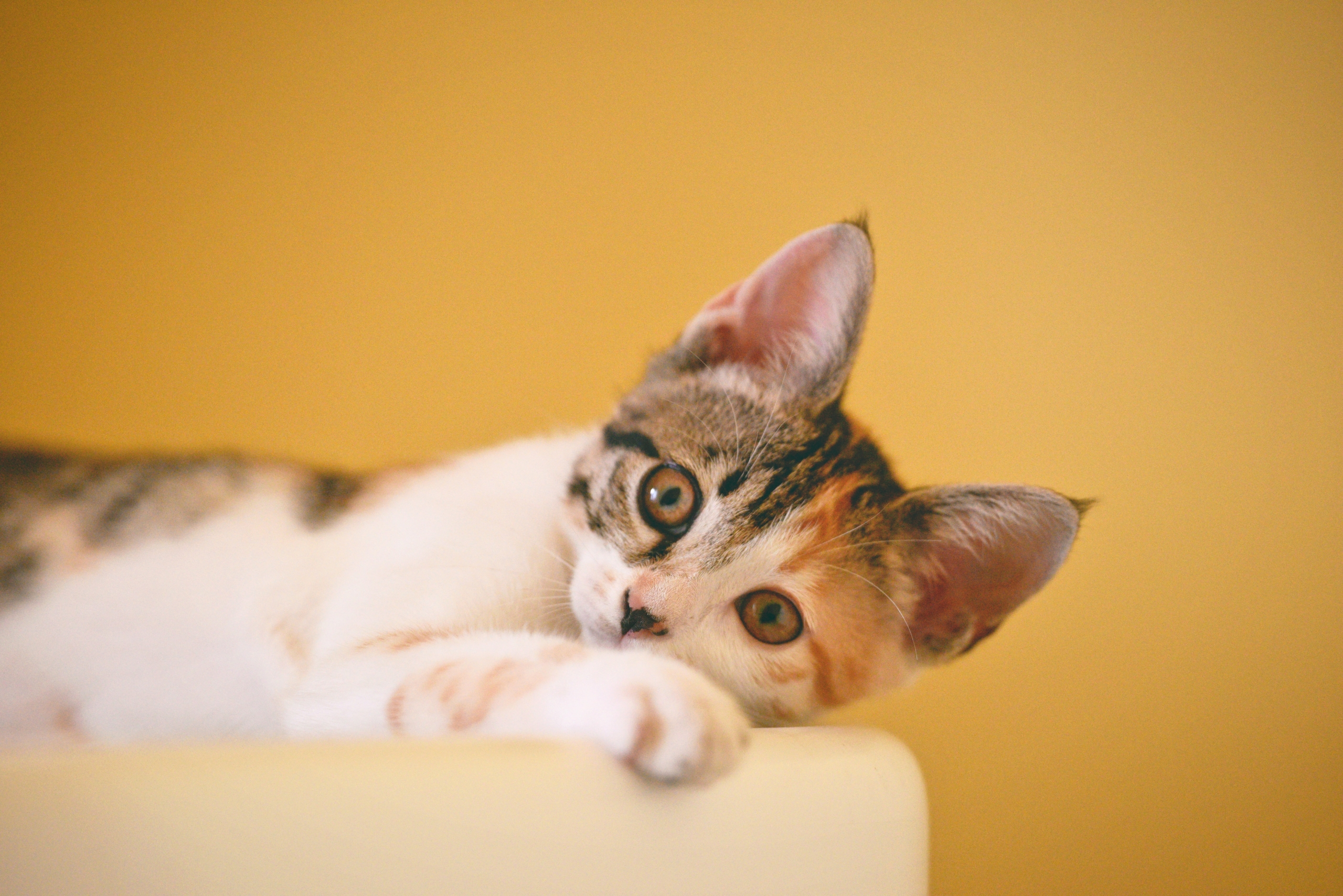 Why You Shouldn't Give Your Cat Milk