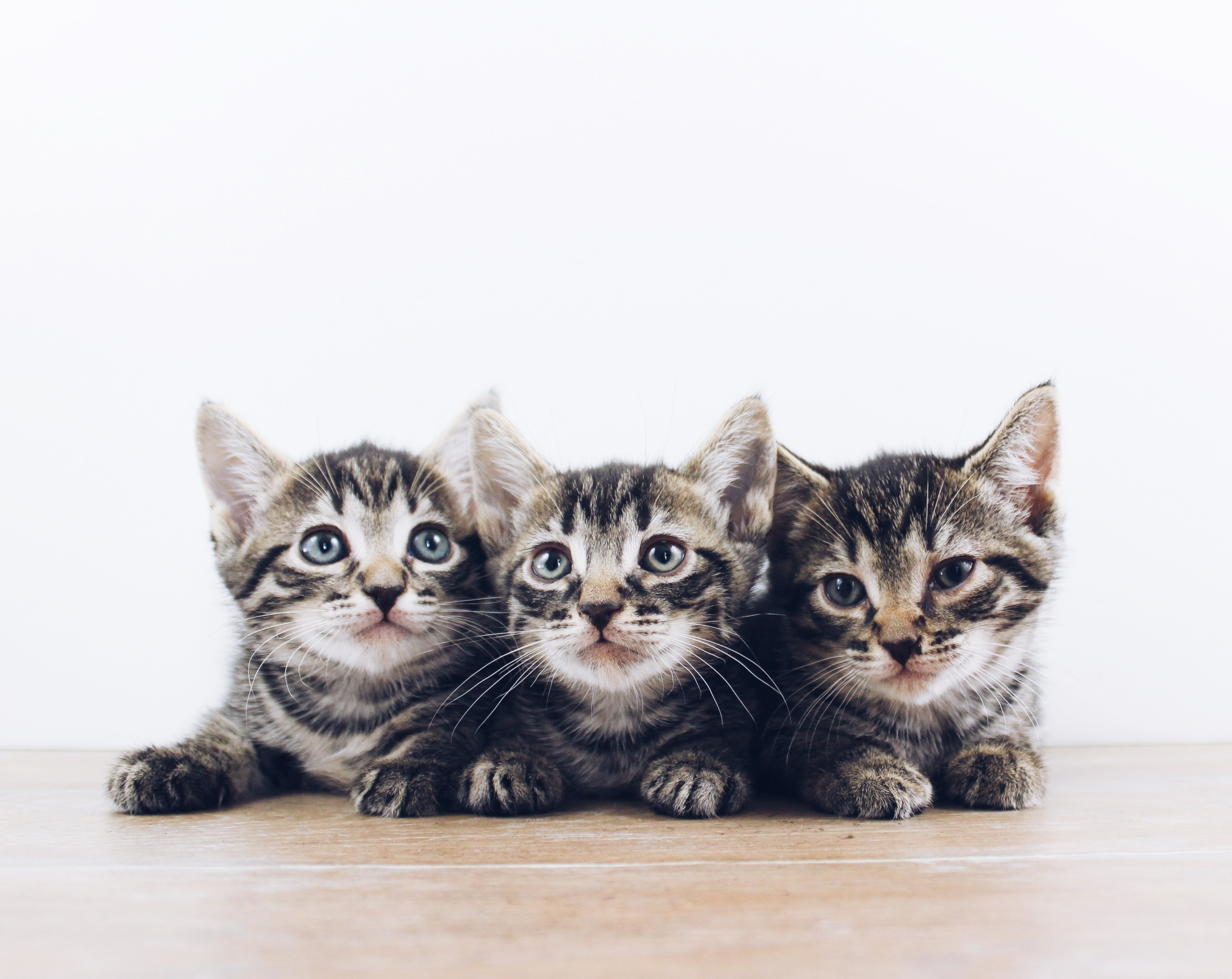 Everything You Should Know Before Adopting A Kitten