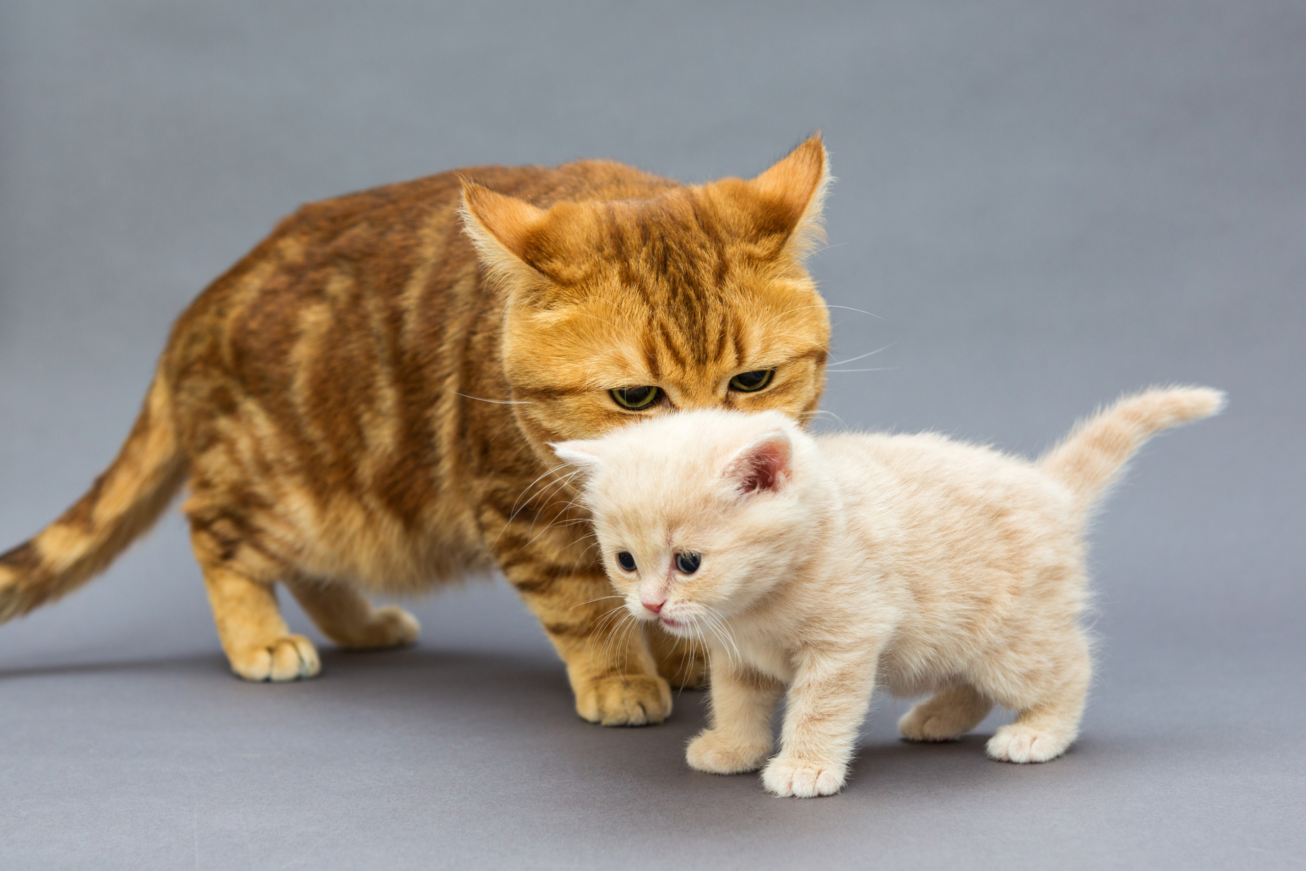 5 Things You Should Know About Postnatal Care for Cats